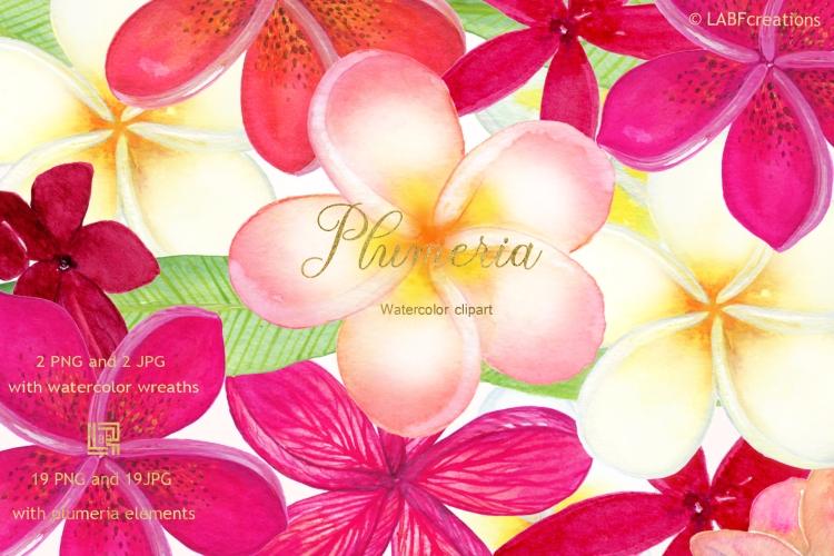 Plumeria presentation image