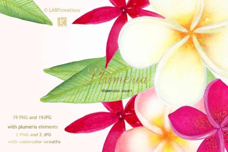 Plumeria presentation image2