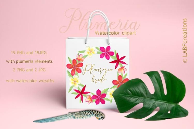 Plumeria presentation image3