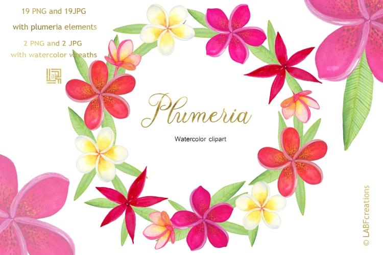 Plumeria presentation image4