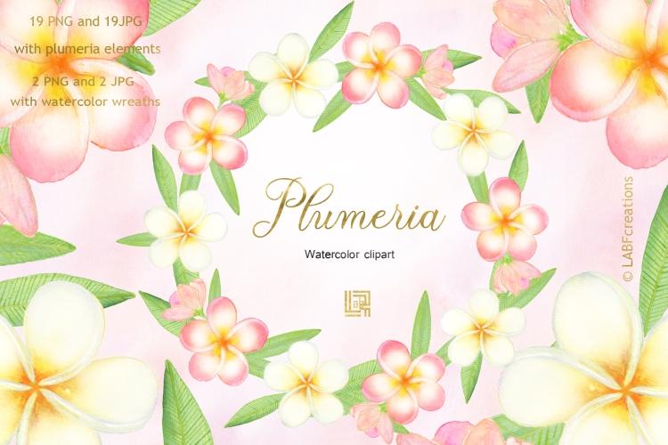 Plumeria presentation image5